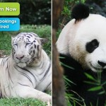 Zoo Negara Entrance Ticket Price Special Discount Malaysia Promotion