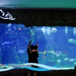 Complimentary Child Ticket To The Shore Oceanarium Melaka