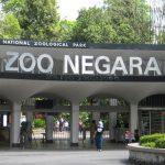 Zoo Negara Entrance Ticket Giveaway 送出免费入门票!